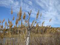 Coastal New England Marsh Landscape