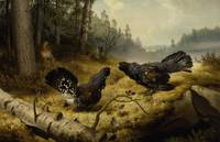 Ferdinand von Wright , The Fighting Capercaillies,