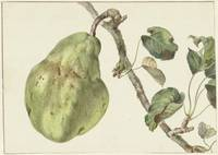 Pear on a branch, Peter Gevers, 1781