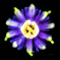 Abstract Passion Flower Violet Blue Green 002a