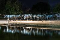 Dallas Longhorn Stautes Reflections