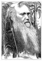 Charles Darwin Caricature 1873 Restored Illustrati
