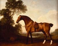 A Saddled Bay Hunter - George Stubbs