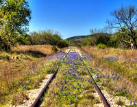 #12-Old Railroad Tracks with Blue Bonnets
