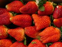 Juicy Red Ripe Strawberries