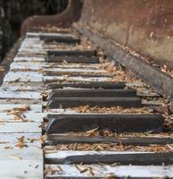 Piano Keys and Spruce Needles