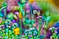Abstracted Wildflowers
