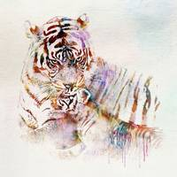 Tiger with Cub watercolor