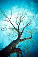 Winter Tree Blue