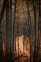 #122 Bamboo Forest