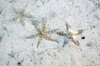Starfish from the Philippines