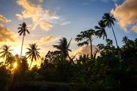 Palm tree at sunset in Moorea island
