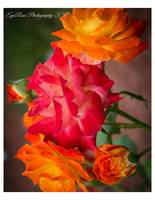 Multi_Color_Bloom Rose Bouquet