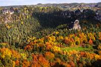 Ocean of Fall Trees. Saxon Switzerland