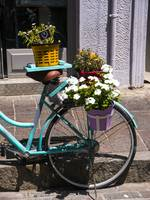 Bicycle Plants