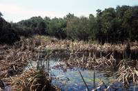 Cape Hatteras, Sawgrass Marsh #2, NC (1975)