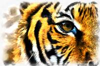 The Proverbial Eye of the Tiger