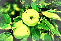 Imperfic Green Apples_Agriculture 3_water_faded ed