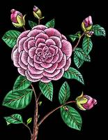 Camellia Flower Watercolor Black Background