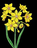 Yellow Daffodil Watercolor with Black Background