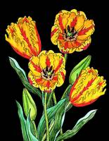 Parrot Tulip Flowers Watercolor Black Background