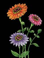 Zinnia Flowers Watercolor With Black Background