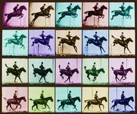 Time Lapse Motion Study Horse And Rider Color