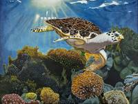 Jack the Hawksbill Turtle