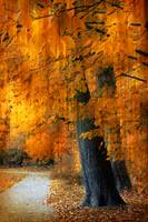 Rustic Autumn Path