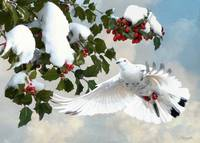 White Dove and Holly