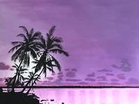 Tropical Purple Sunset
