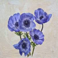 Pretty Periwinkle Poppies