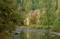 North Fork Skokomish River near Staircase Rapids