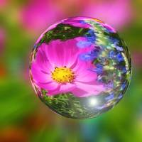Colorful Pink Flower in a Glassy Bubble