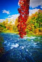 Autumn's Flame - Niagara Falls, New York