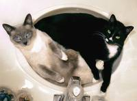 Two Cats in a Sink