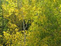 Vivid Yellow Leaves on the Autumn Trees