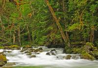 Newhalem Creek Cascades, North Cascades National P