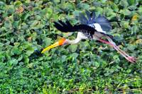 The Stork's TakeOff
