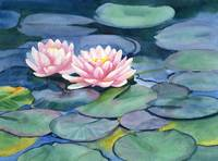 Pink Waterlilies with Colorful Pads