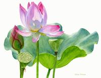 Lotus Blossom with Lily Pad and Bud