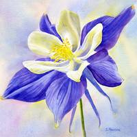 Single Blue Columbine Flower with background