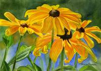 black eyed susans horiz 11x16 res 300