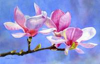 pink and whtie magnolias on a branch with backgrou