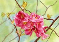 flowering quince with background