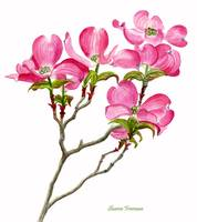 Pink Dogwood white background (vertical design)