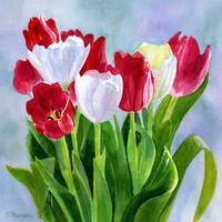 Red and White Tulip Bouquet Blue Gray Background