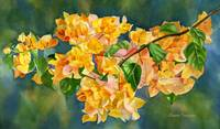Gold Colored Bougainvillea with Background