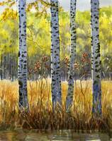 Autumn Birch Trees in Shadow