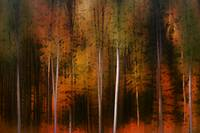 Autumn forest edge